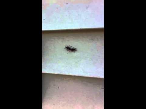 Bug porn 69