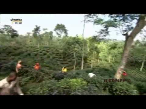 Wonderful Chill Out Of Bangladesh - The Land Of Beauty (Part 1)