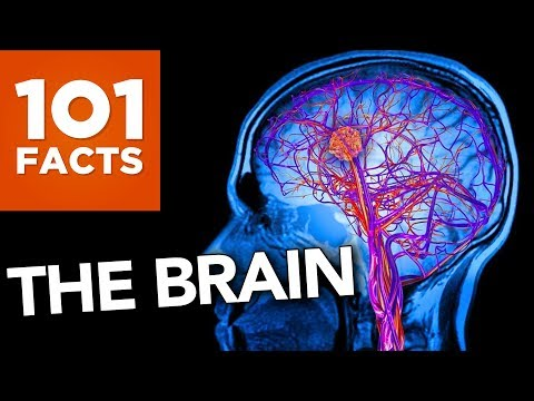 101 Facts About The Brain