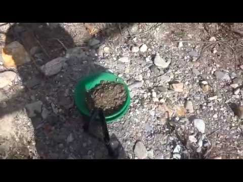 Searching For Gold At Fort Steele And Fisherville