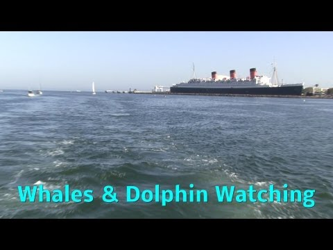 Family Vlog: Hulyan & Maya's Whale Watching in California. We Saw Dolphins!