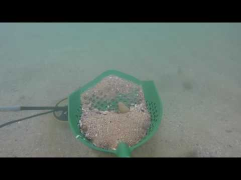 LJR#36 Underwater Metal Detecting, Storm Reveals Gold💍