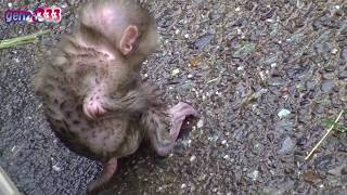 Baby monkey scared