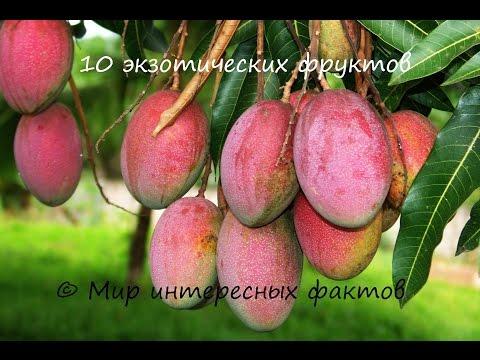 20 экзотических фруктов - 1 часть | Мир интересных фактов