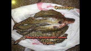 Рыбалка  налима на донки,подбор наживки в октябре.
