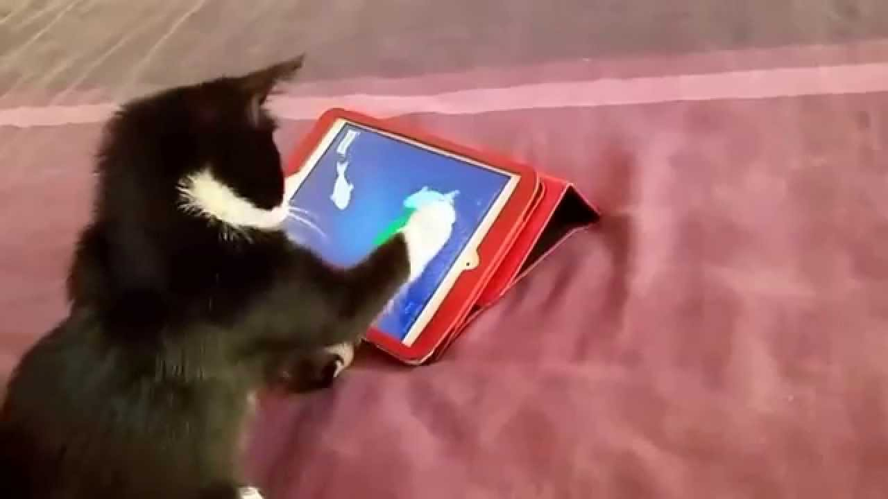 Funny cat catch fish on ipad cats playing games super for Fish cat game