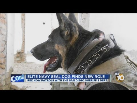 Elite Navy SEAL dog finds new role in San Diego