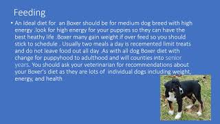 Fact about boxers dog