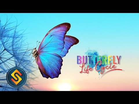 Butterfly Life Cycle   Life Cycle Of A Butterfly   Monarch Butterfly Life Cycle #Education #Kids