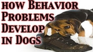 Dog Behavior Problems & What You Can Do!