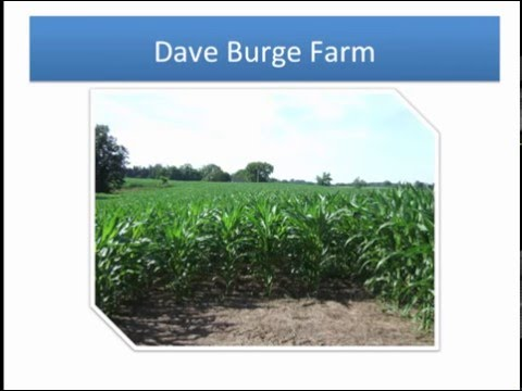 How I've Intergraded Corn Grazing Into My Forage Program - Tommy Yankey