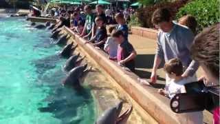 Диснейленд. Орландо. Водный мир (sea world) часть 2.(, 2013-01-08T01:37:17.000Z)