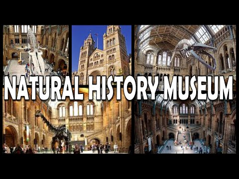 NATURAL HISTORY MUSEUM LONDON 4K