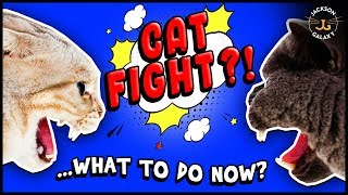 How to Deal with Cat Fights