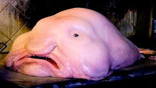 Глубоководные рыбы. Топ 5 странных рыб океана.