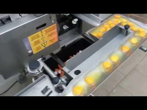 Egg Breaker single line RZ—1, Made in OVO-TECH Poland.