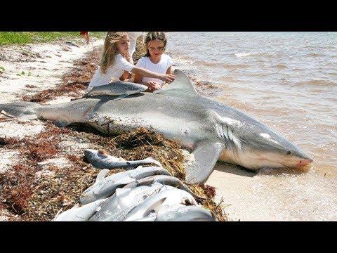 Wonderful Women Help Shark Giving Birth To 20 Baby On The Beach