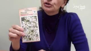 Петунии в саду: видео-инструкция по выращиванию своими руками, особенности садовых цветов, фото