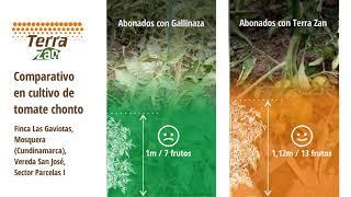 Abono orgánico TERRA ZAN | Parcelas demostrativas
