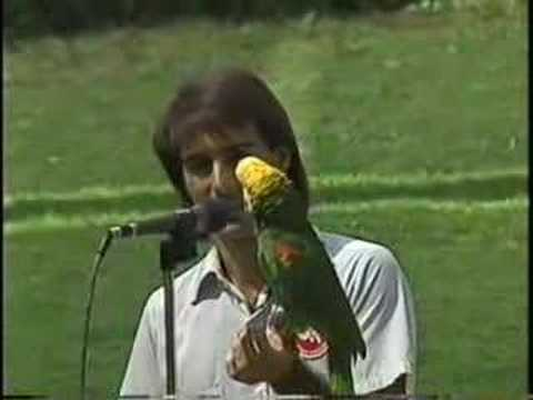 Pancho The Singing Parrot