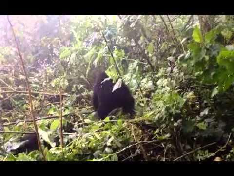 Rwanda Adventures
