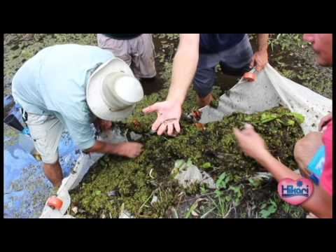 Collecting Native Florida Fish