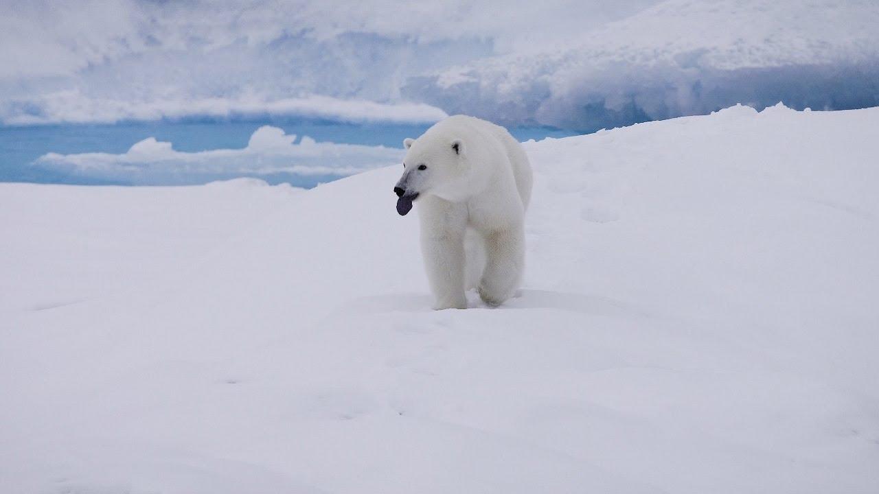 【動画】北西航路 北極の野生生物の観察