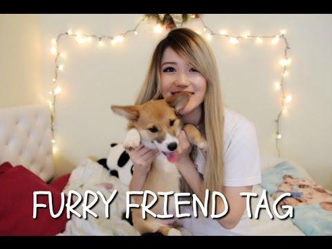 FURRY FRIEND TAG   Corgi Puppy and Maincoon Kitten