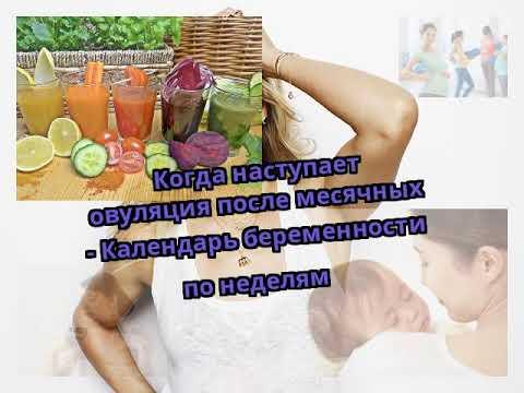 Когда наступает овуляция после месячных - Календарь беременности по неделям
