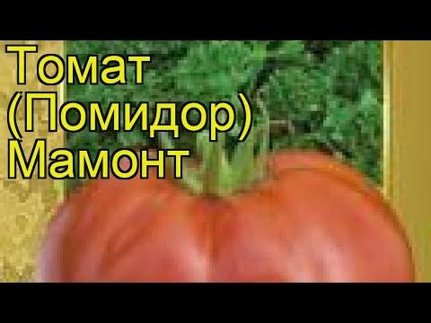 Томат обыкновенный Мамонт (Mamont). Краткий обзор, описание характеристик, где купить семена