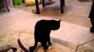 Антицарапки  на когти для кошек распаковка  посылки с  Aliexpress