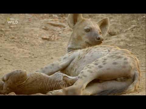Африканские охотники 3 сезон 5 серия - Смертельные соперники