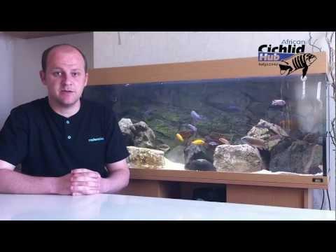 Starter Mbuna List for the Beginner - African Cichlids - Mbuna