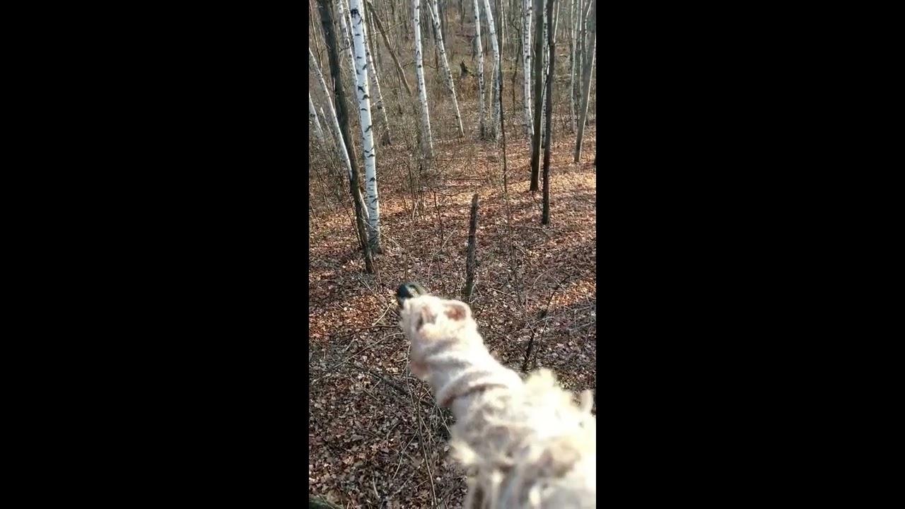 450 Bushmaster deer kill