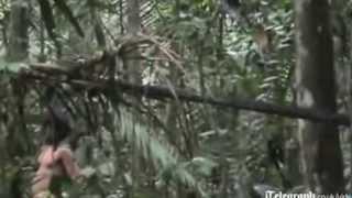 Phim | Video hiếm về bộ lạc biệt lập trong rừng Amazon | Video hiem ve bo lac biet lap trong rung Amazon