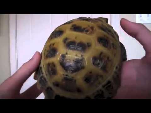 Tortoise Anatomy Youtube