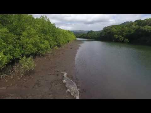 Port Douglas Crocodiles FNQ