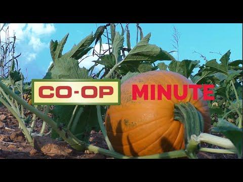 Co-op Minute: Pumpkin Harvest