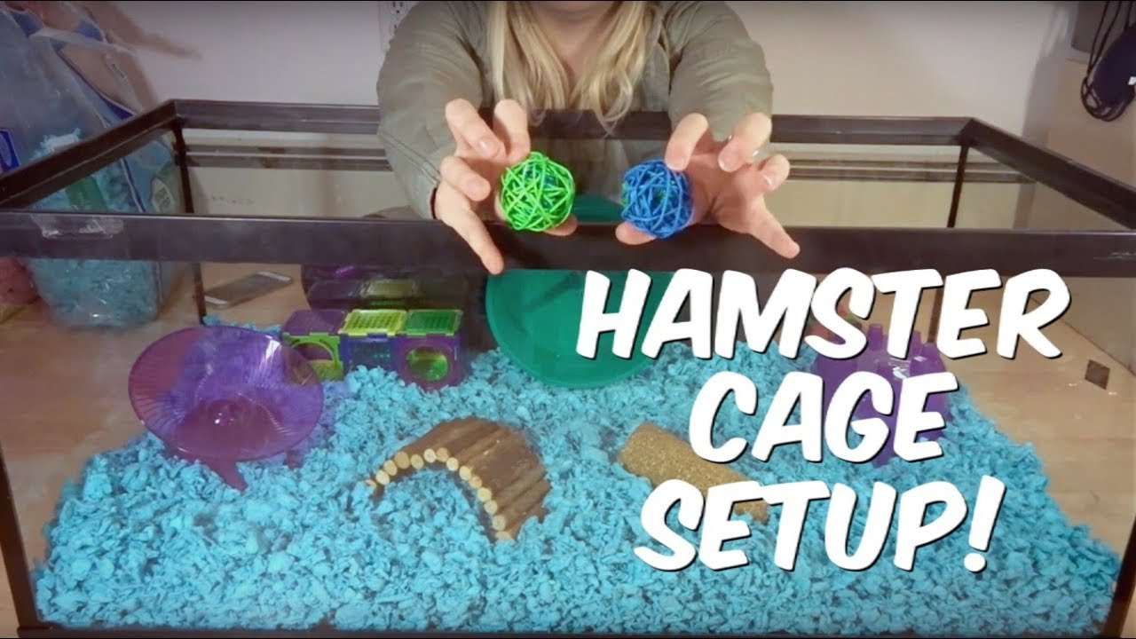 How To Set Up A Hamster Cage You