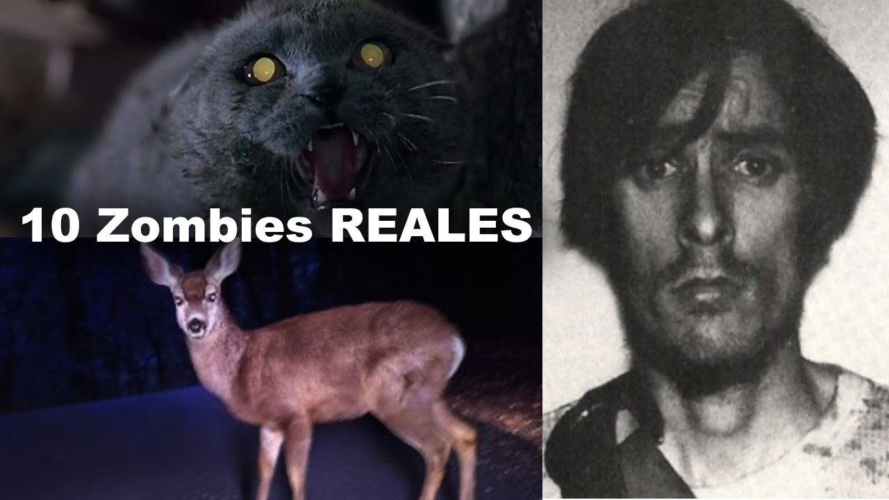 10 Zombies Reales