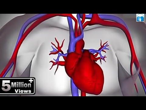 हृदय कैसे कार्य करता है? (How the Heart Works in Hindi)