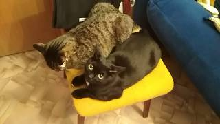 Кот обормот ! Это вся моя семья, Василиса и полосатый котик я.