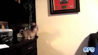 Видео подборка пьяных котов. Смешные кошки и коты  #3 МАЙ 2015