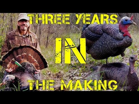 Spring Turkey Hunting On Public Land (Archery Hunt)
