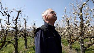 Le gel décime la production de fruits