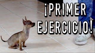 El PRIMER ENTRENAMIENTO de un perro CACHORRO  MartGon