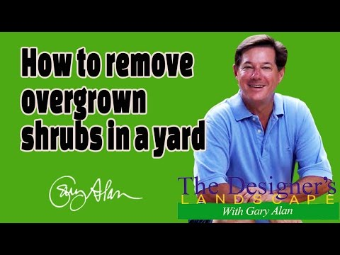 How to remove overgrown shrubs from a yard Designers Landscape#617