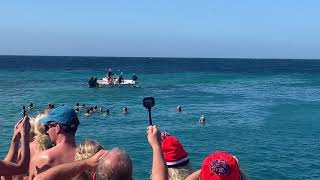 Dolfijnenshow Nieuwjaarsdag 01-2019 Zanzibar Curaçao Jan Thiel Beach