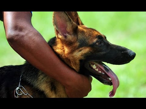 Dog Training In Kerala [sajan dog training ]09946515222