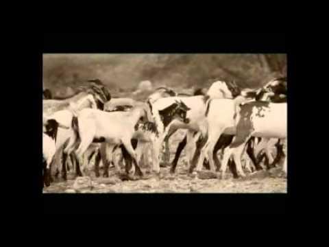 eritrean music bilen sefelal by mehret zerhans